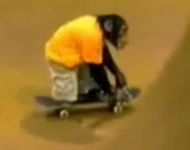 Chimp on a Skateboard