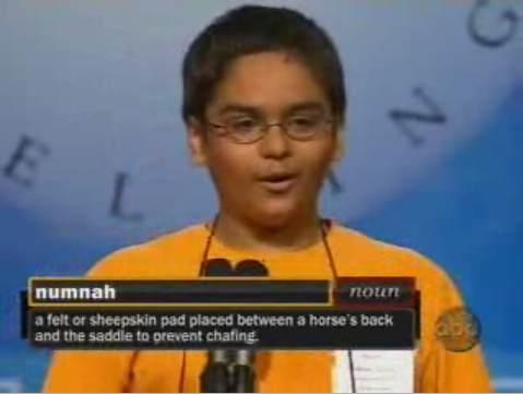 2008 Spelling bee numnah