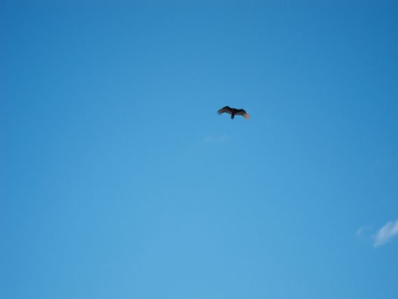Day 82 - OMG A Bird