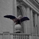 Day 113 - Grand Central Eagle