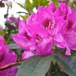 Day 139 - Flower