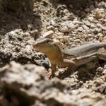 Day 151 - Curaçao Wildlife
