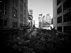Day 237 - Urban Jungle