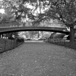Day 298 - Central Park In Autumn