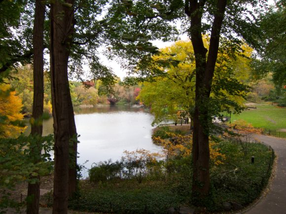 Day 311 - Fall In Central Park