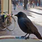 Day 332 - Blackbird