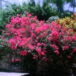 Plant life on the island