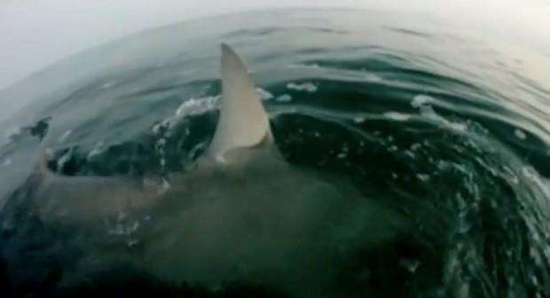 Hand Feeding A Shark