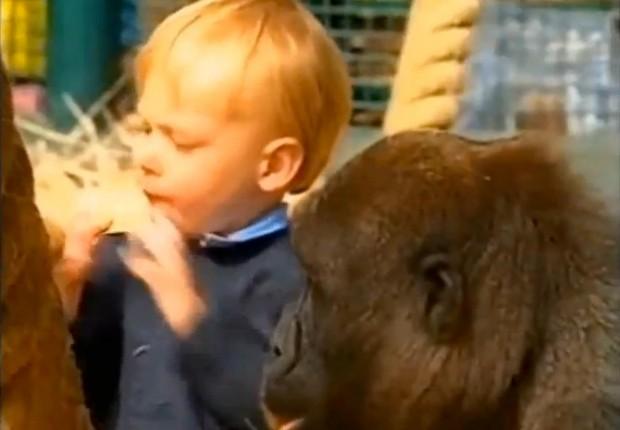 Tansy Aspinall Meets The Gorillas