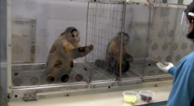 Moral Behavior In Animals